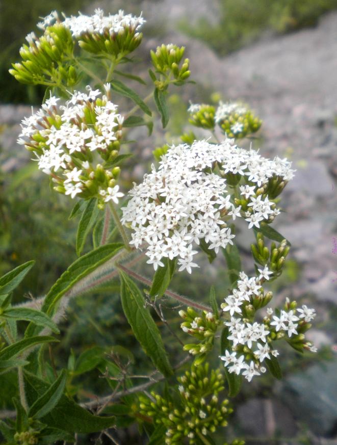 Hermosas florecillas blancas