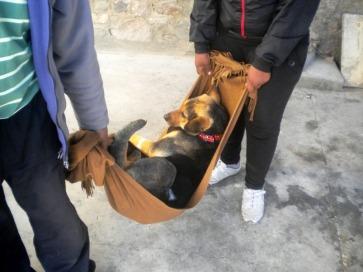 Una de las mascotas, dormida después de ser operada