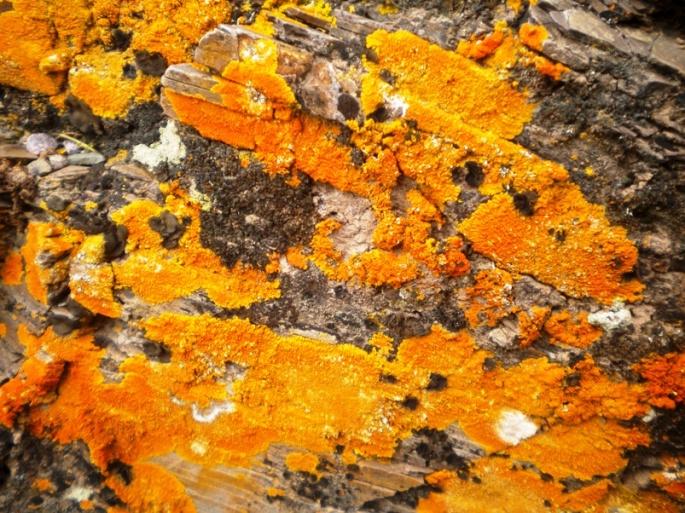 Líquenes tapizan las rocas