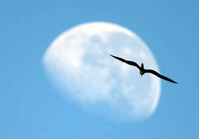 11 y 12 de mayo: Día Mundial de las Aves Migratorias