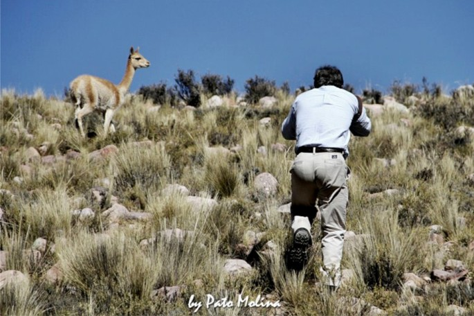 Impactante foto de Pato Molina: el fotógrafo Charly Hawk al momento de fotografiar a una vicuña, camino a Iruya (durante su viaje en 2013)