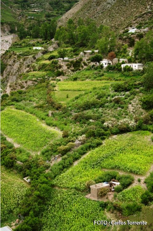 Vista de San Isidro en verano. Se ve mucho verde. (Foto: Carlos Torrente)