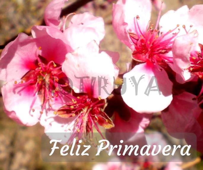 305 Feliz Primavera